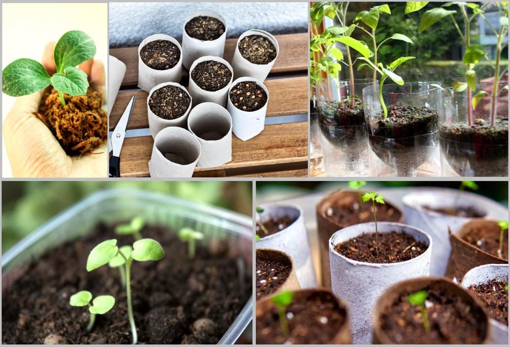 Тара для выращивания рассады дома