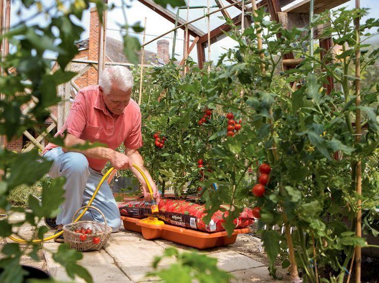 Особенности выращивания Де Борао в теплице