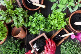 Чем подкормить зелень и лук