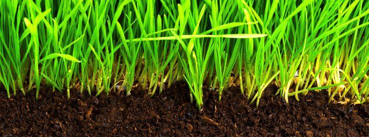 Требования к почве и к поливу для выращивания лука