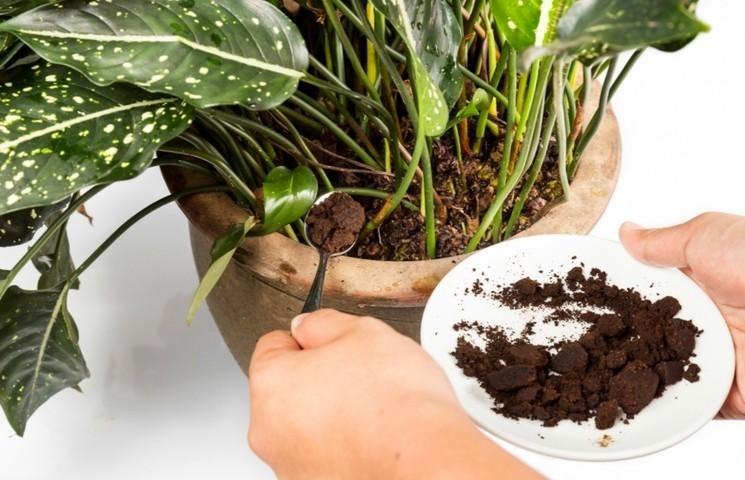 Как удобрять цветы кофе?