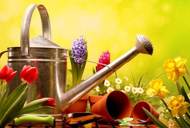 Подкормка садовых растений и комнатных цветов