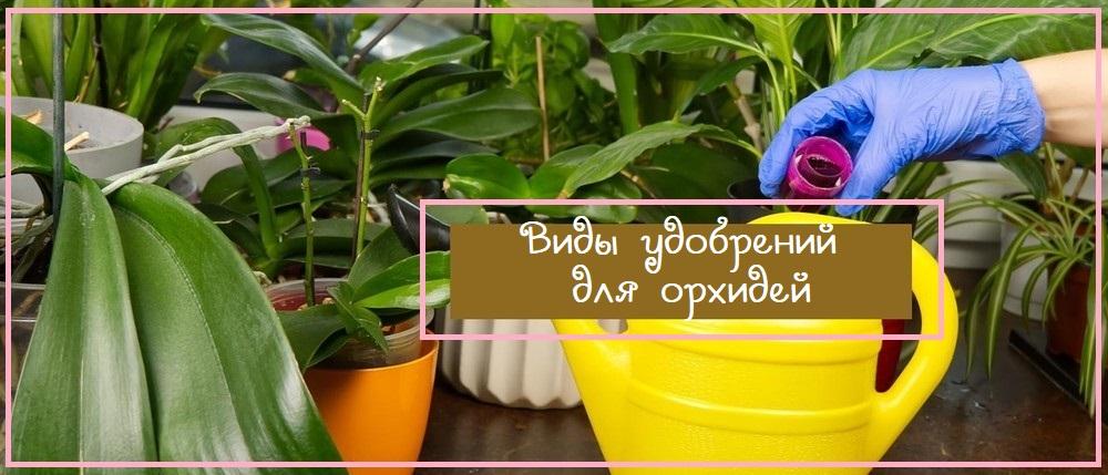 Виды удобрений для орхидей