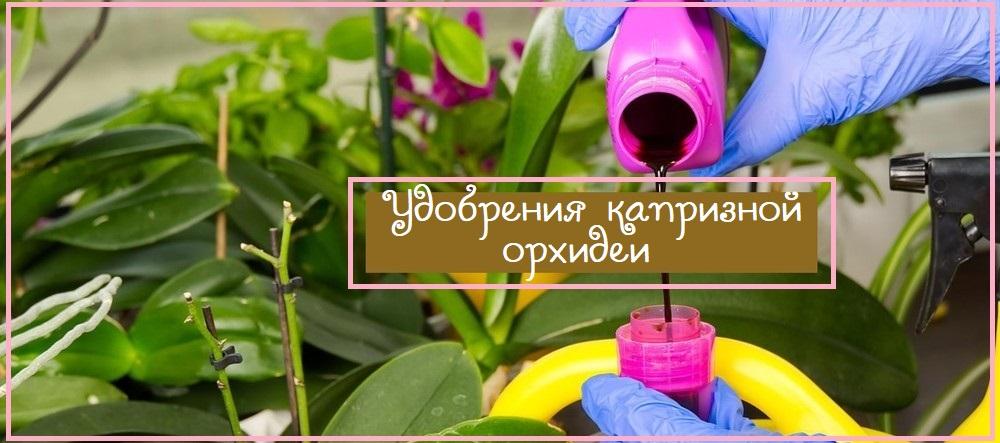 Как подкормить капризные орхидеи