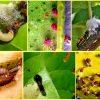 Вредители груши и способы борьбы с ними