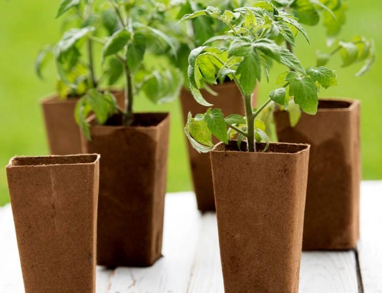 Выращивание рассады дома
