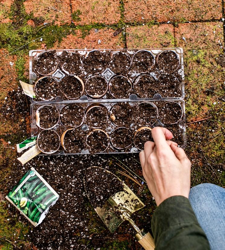 Когда сеять семена овощей на рассаду?