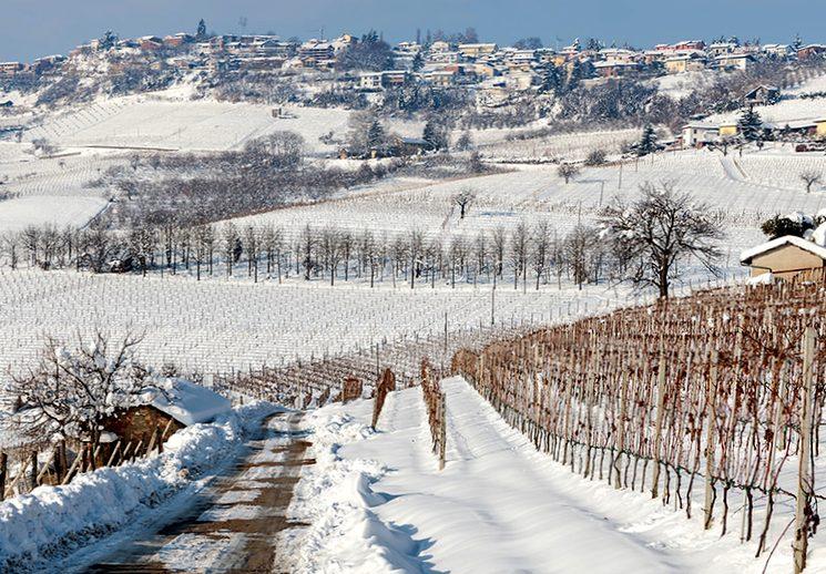 Как укрыть молодой куст винограда на зиму