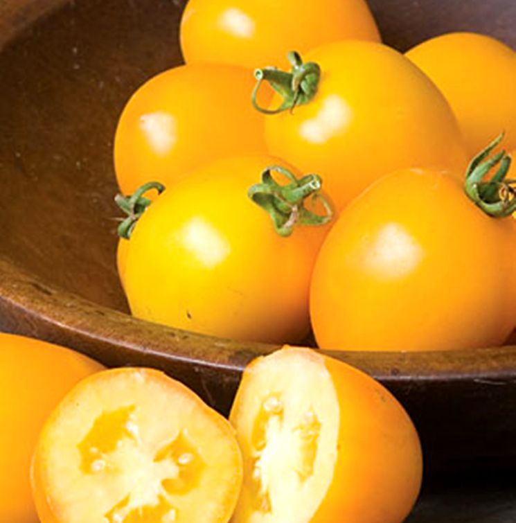 Золотой или желтый томат де барао